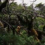 Forêt magellanique 1