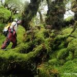 Forêt magellanique 10