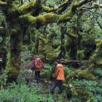 Forêt magellanique 2