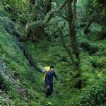 Forêt magellanique 3