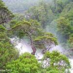 Forêt magellanique 4