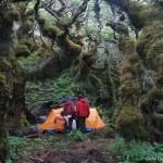Forêt magellanique 5
