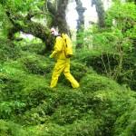 Forêt magellanique 6