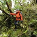 Forêt magellanique 7