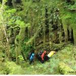 Forêt magellanique 8